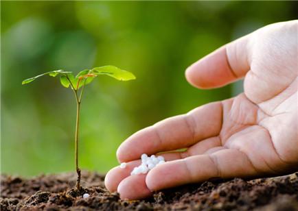 plant-feed